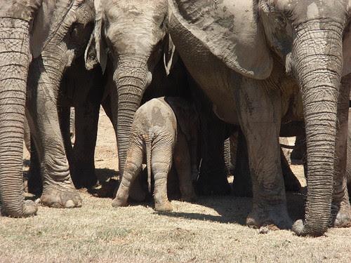 Sydafrika feb 2007 219