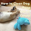 How To Safely Clean Up Dog Diarrhea From Your Carpet