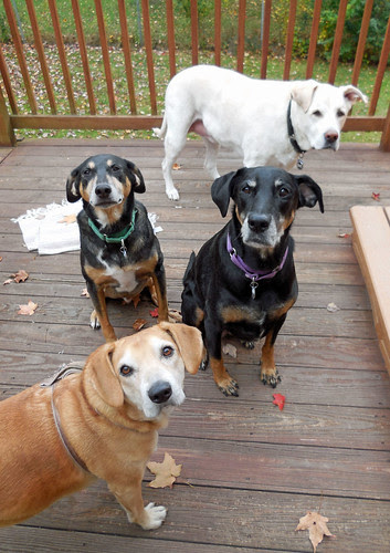 4dogs_101013