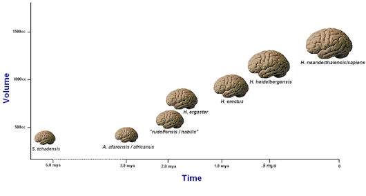 The Evolution of Conscious Attention