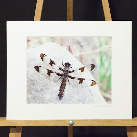 Clearance Sale  Matted 8x10 print  Ready to by sherivwphotography