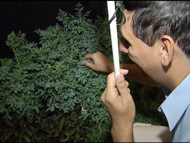 Devanir de Lima é deficiente visual há 25 anos e visitou o Jardim Sensorial (Foto: Reprodução/ EPTV)