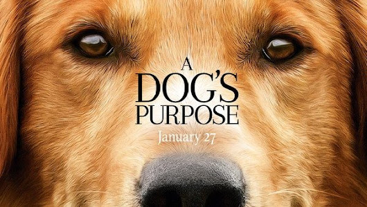 "Rescue Groups Cancel ""A Dog's Purpose"" Screenings -- Do You Plan to See It? Or Will You Boycott?"