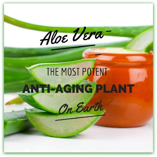 Aloe Vera for Wrinkles – Why It's the Ultimate Anti-Aging Plant (+6 Homemade Recipes) - Natural Alternative Therapies