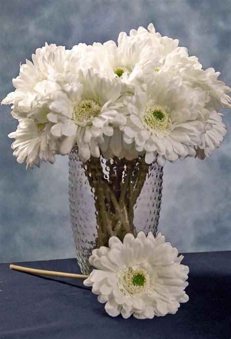 """24 Cream White Gerbera Daisy Flowers 9"""""""