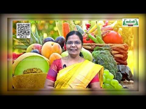 11th Food and Nutrition காய்கறிகள் மற்றும் பழங்கள் அலகு 3 Kalvi TV
