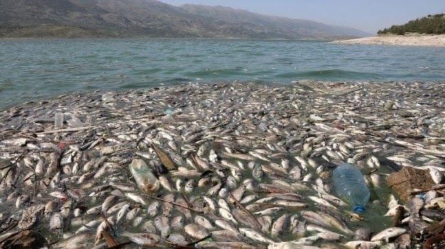 Tonnes of dead fish wash up on shore of polluted lake in Lebanon https://ift.tt/3nD4s8m