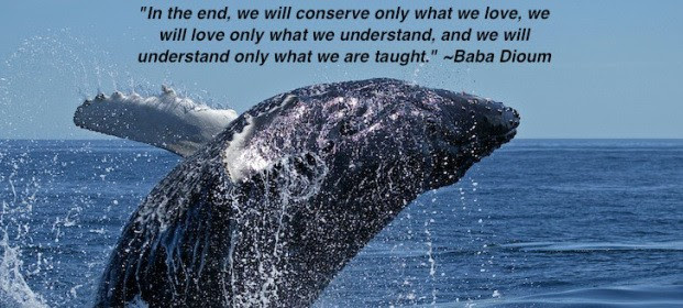 Quote Of The Week We Will Conserve Only What We Love Home Behind