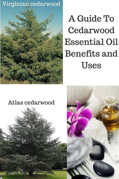 Cedarwood Essential Oil Benefits and Uses In Aromatherapy