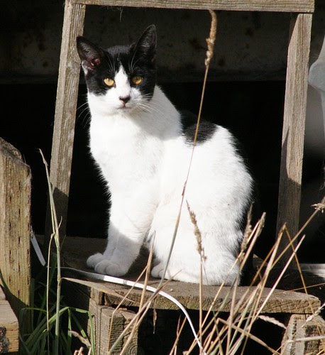 The Return of Cow Cat