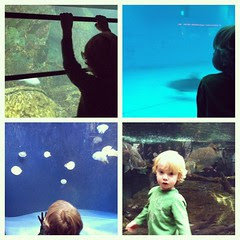 Aquarium with my little man...while the older boys are in a class