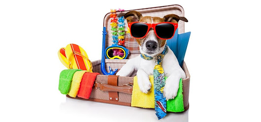 Tips from a Vet on How to Travel with a Pet