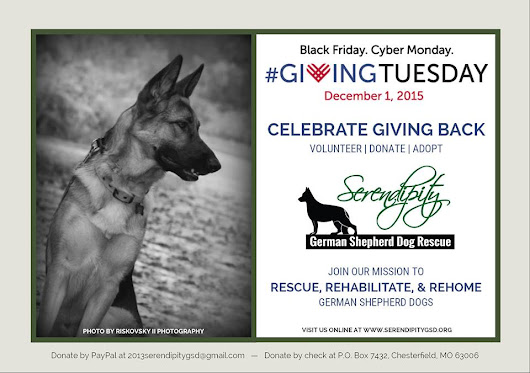 #GivingTuesday: Three Easy Ways to Make a Rescued GSD Smile
