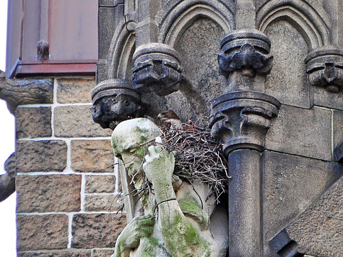 Cathedral Hawk