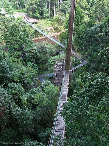 maliau skybridge canopy walk R0012080 copy