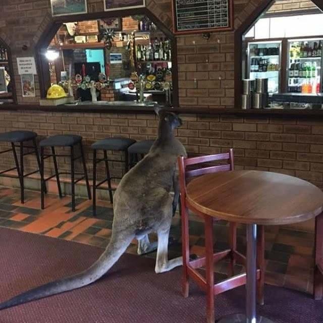 1 - 13 Welcome To Australia Pics