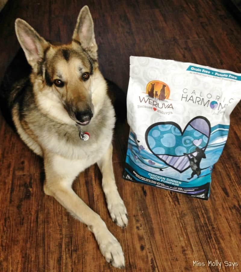 Weruva Caloric Harmony: High Protein Low Carb Dog Food # ...