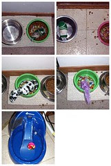 Care and Feeding of Cat Toys