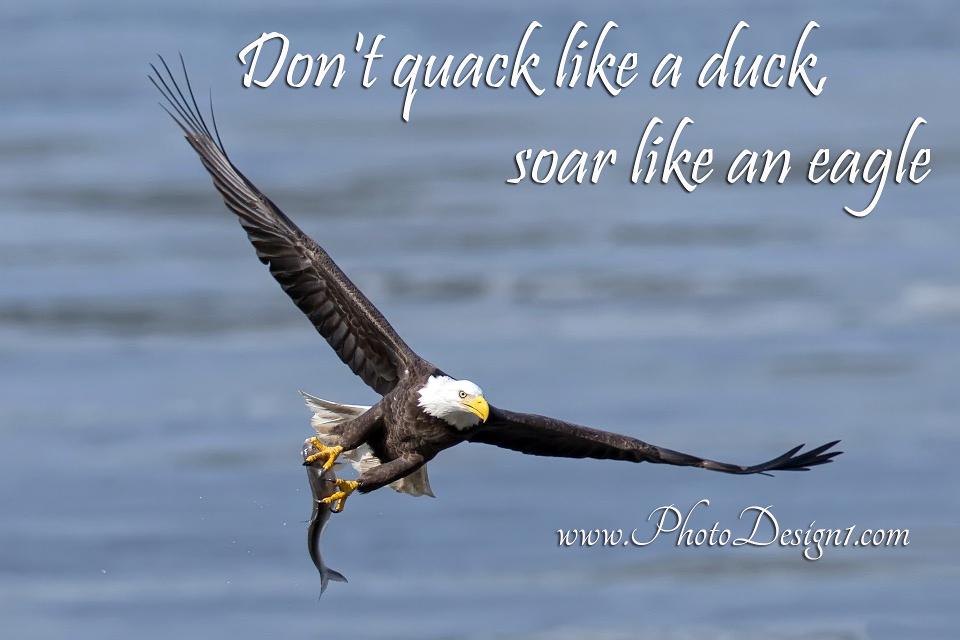 Quotes About Eagle 208 Quotes