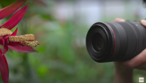 Check Out Canon's Neat New Bokeh Control in the RF 100mm f/2.8L Macro IS USM Lens