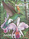 White-vented Violetear Colibri serrirostris