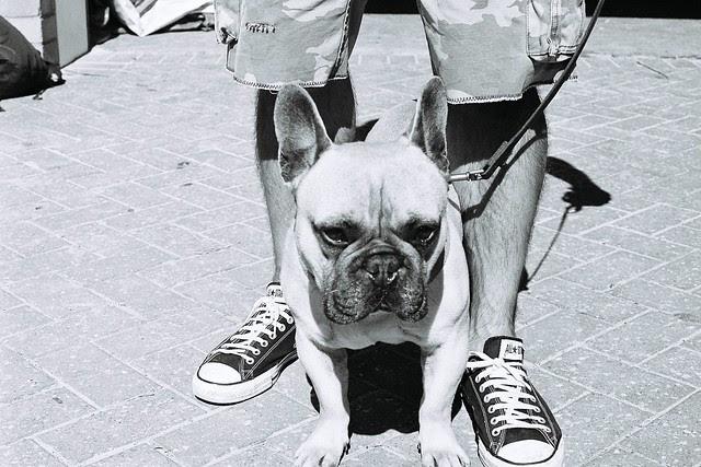 Manly Dog