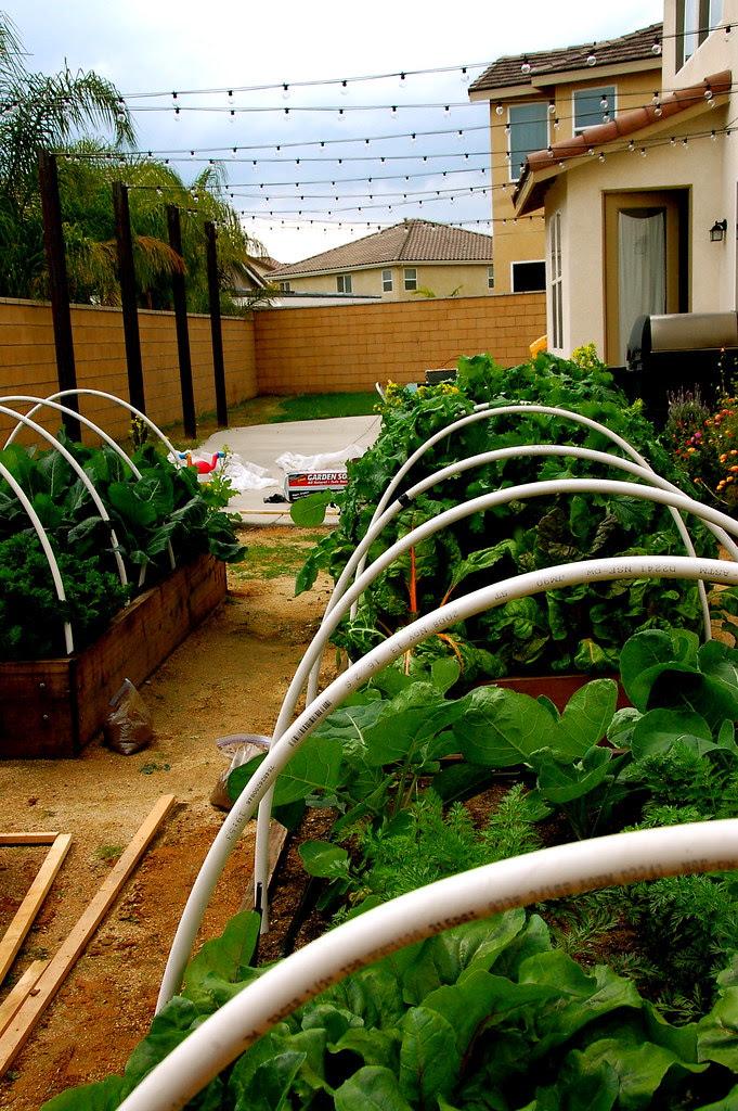 garden beds and backyard