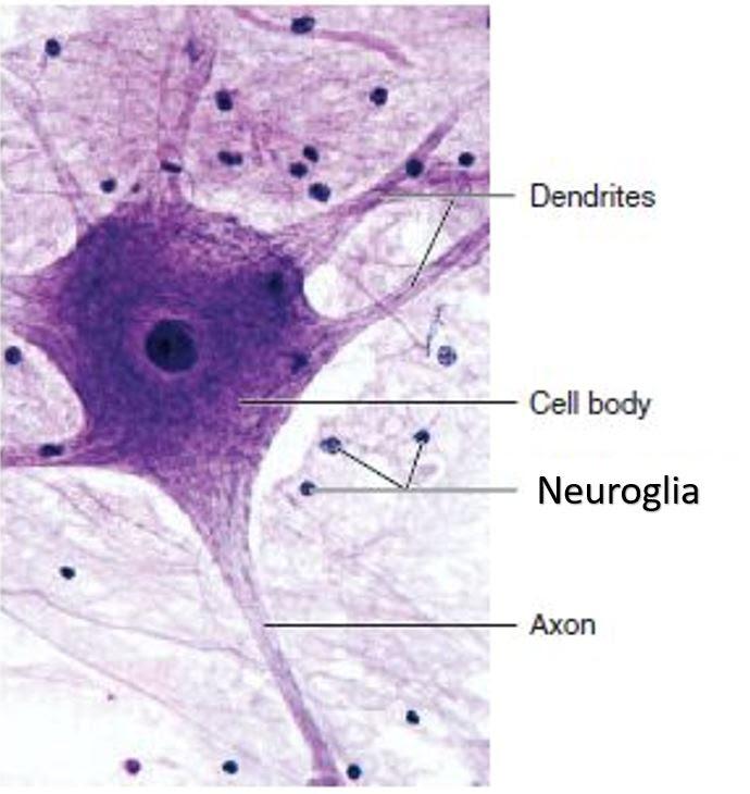 neuron12_orig