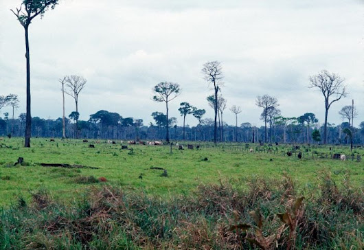 Government Subsidies for Agriculture May Exacerbate Deforestation, says new UN report