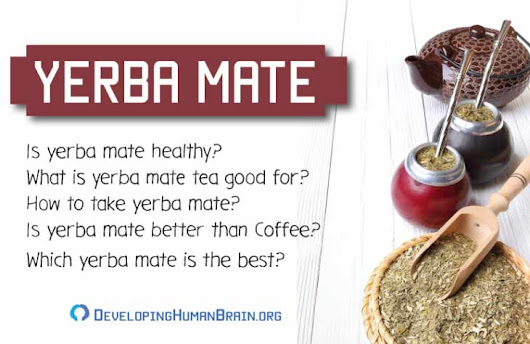 Yerba Mate for the Brain – All You Need to Know