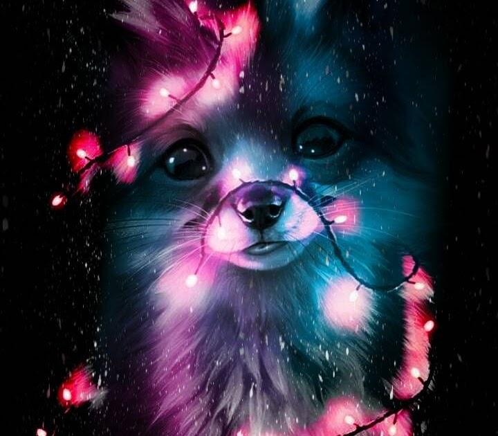 Background Mystical Galaxy Fox Wallpress Free Wallpaper Site