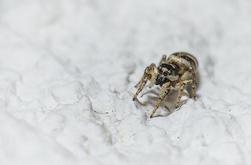 蜘蛛に刺された跡