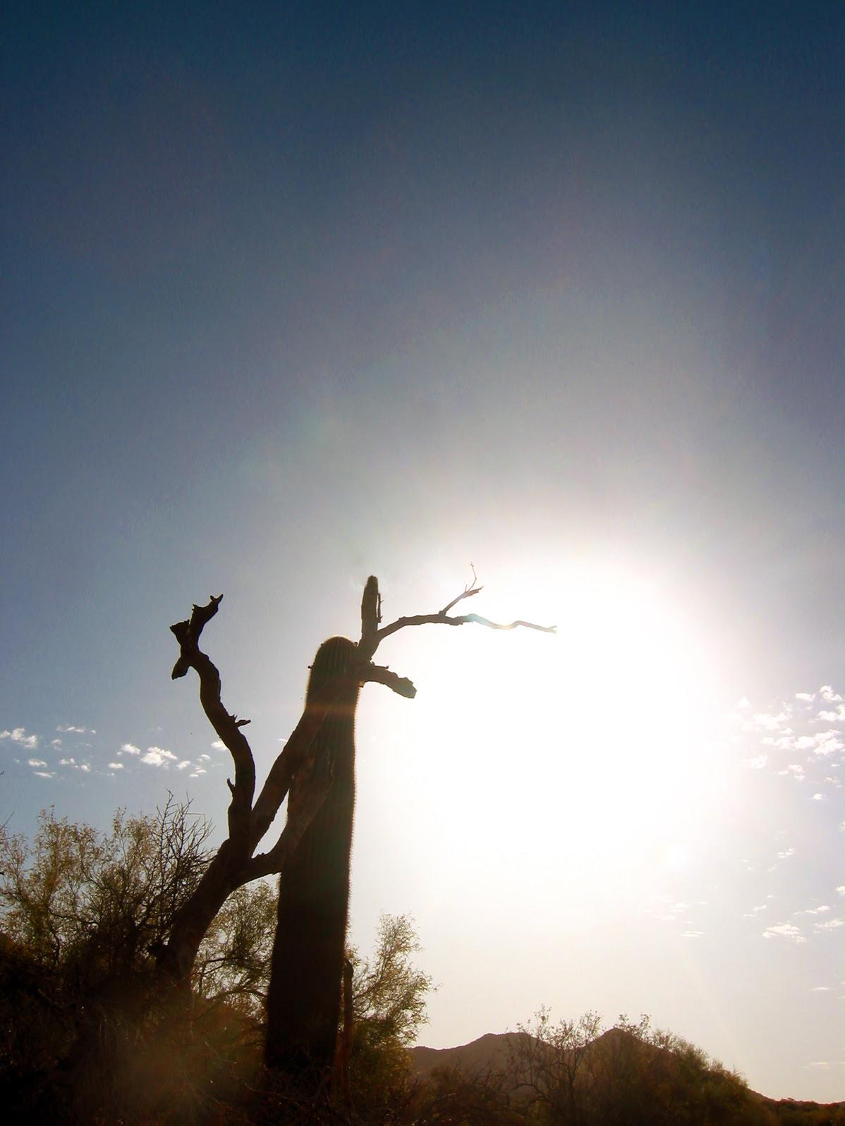 Arizona Desert at Sunrise Photo - soul-amp.com