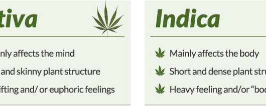 Marijuana Versus Cannabis | What is the difference?
