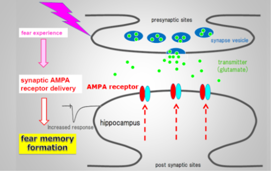 Precise Inactivation of Neural Messenger Receptor Wipes Out Fear Memory in Mice