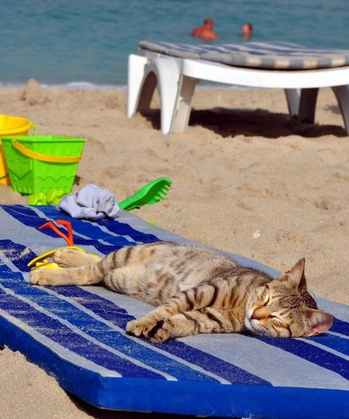 Cat Relaxing On The Beach - Cats Photo (37184136) - Fanpop