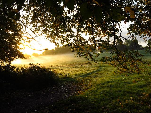 Parliament Hill Fields at Sunrise