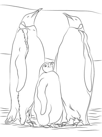 Disegno Di Due Pinguini Imperatore Con Un Piccolo Da Colorare