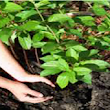 Various Types of Organic Fertilizer for Gardens