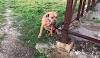 Abandonan a un perrito amarrado a una valla con la nota más triste del mundo
