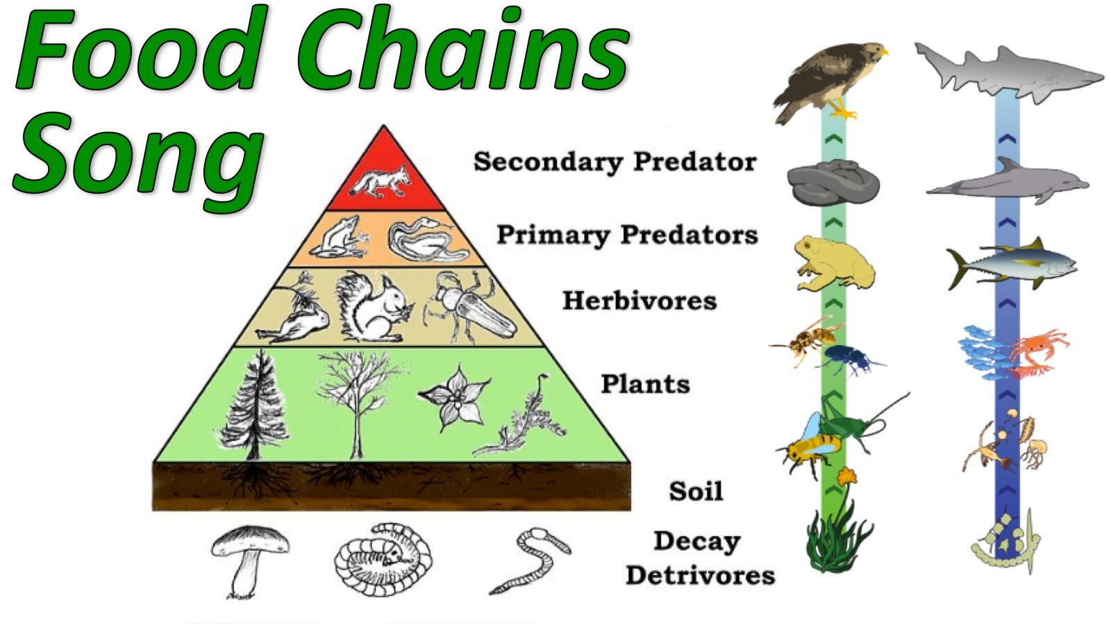ANIMAL FOOD CHAIN | Create WebQuest