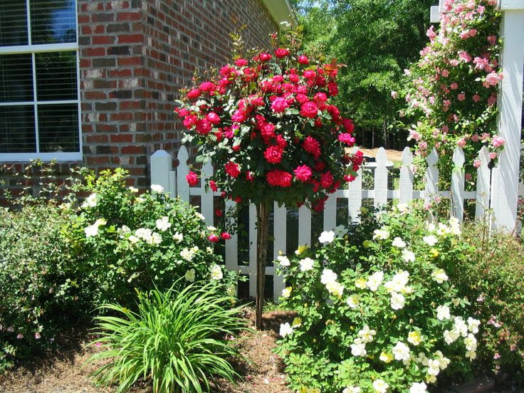 Do Your Best Landscaping Ideas Knockout Roses