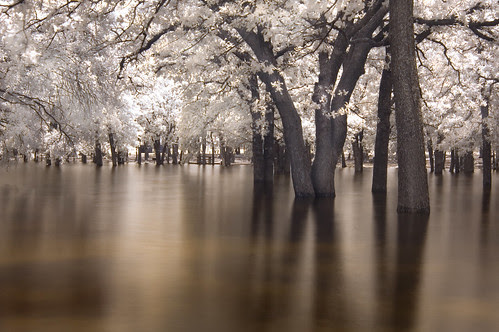 the drowning trees (infrared) por mike.irwin