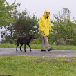 Potty Training for Dogs Who Hate to Go in the Rain