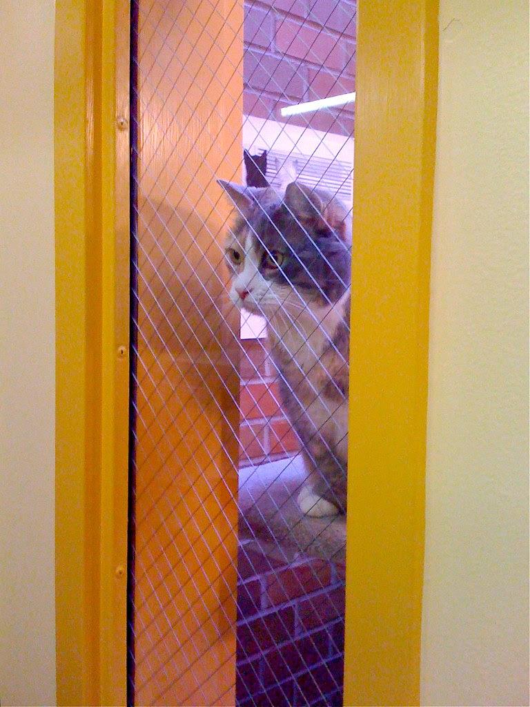 iPhone Wednesday:  Animal Shelter