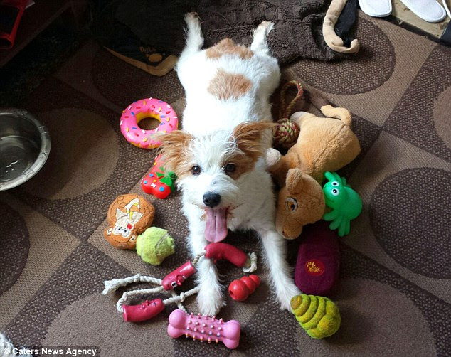 Ms Hope-England said she opened up the Instagram account for Ginny after seeing another dog-based account