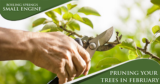 February Maintenance Tip – Pruning Your Trees – Lawn Mower Sales and Service | Spartanburg | Mowers – Edgers – Blowers – Equipment Rentals in Spartanburg