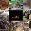 Surabaya Zoo Animal Welfare... - The Petition Site