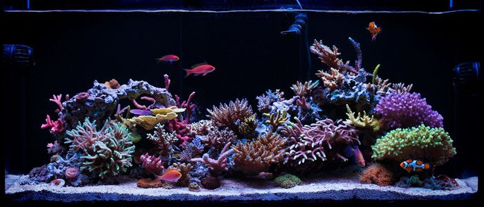 53+ Ide Design Your Aquarium Online Terbaik Download Gratis