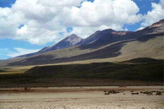 Vicunas in the Andes.jpg